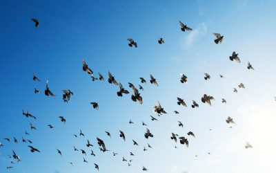 Birds are born to be free…