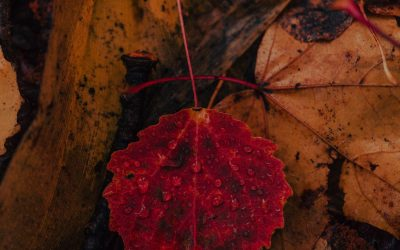 Surrounded by Yellowing Leaves…